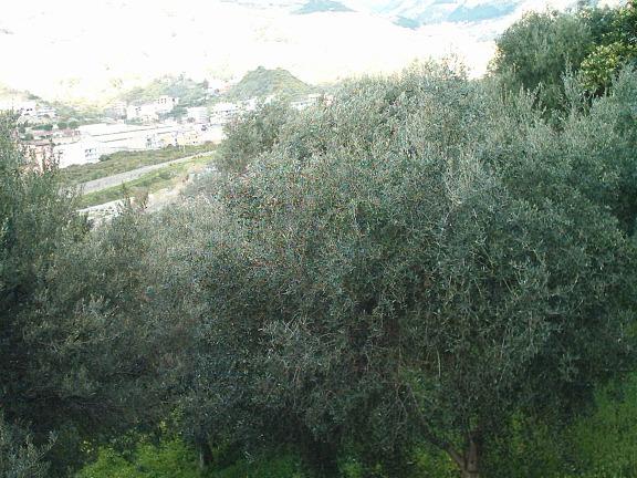 Terreno REGGIO DI CALABRIA vendita  San Sperato  BERNA IMMOBILIARE AGENCY SRLS
