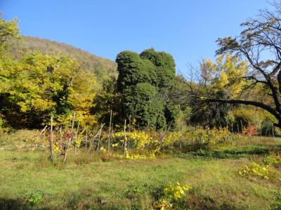 Terreno in vendita a Cinto Euganeo