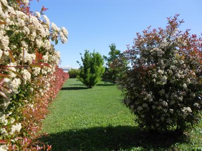 CADONEGHE - Q.RE BRAGNI: porzione di bifamiliare con ampio giardino.