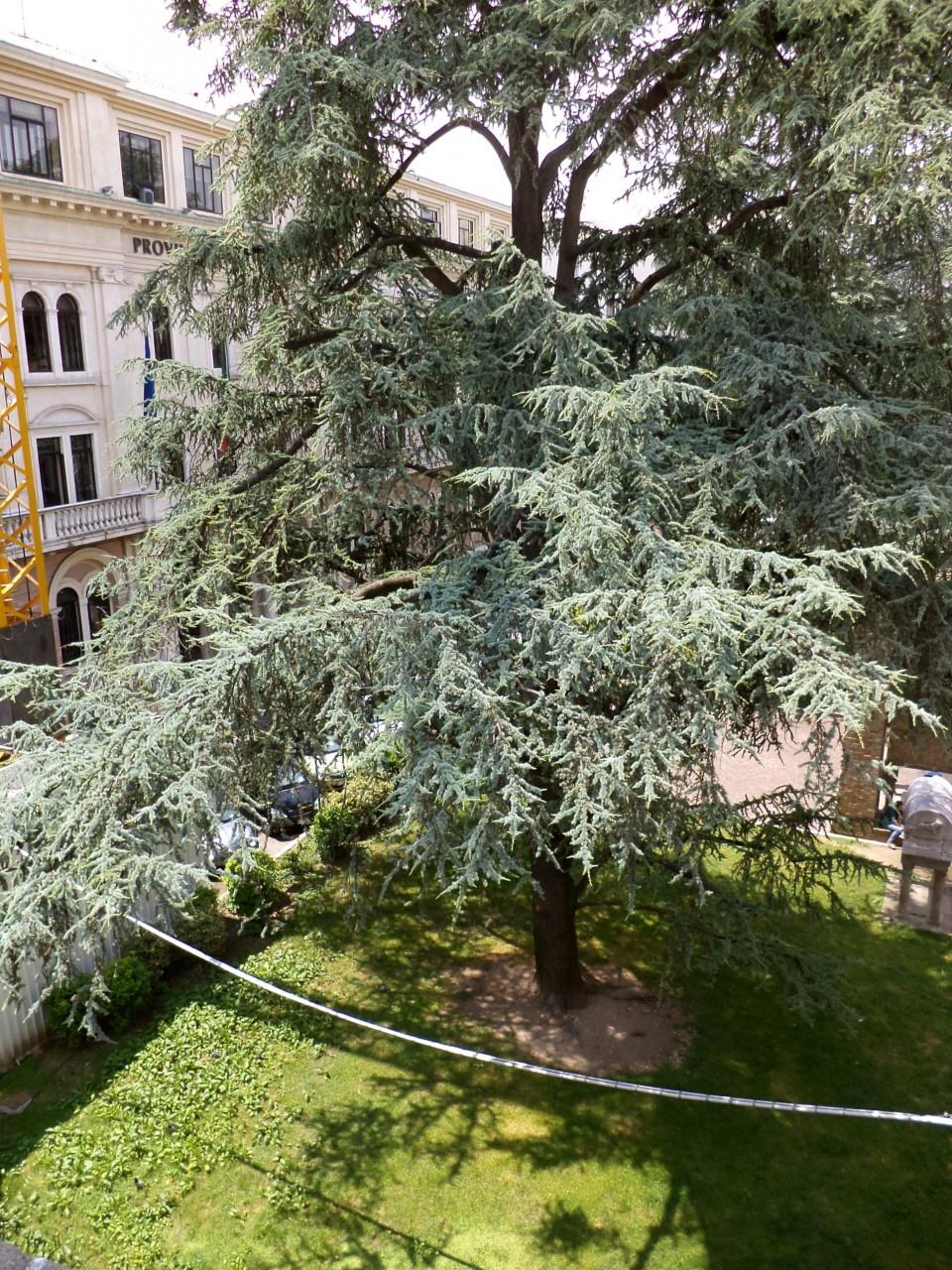 PADOVA - Piazza Antenore: luminoso ufficio monovano - https://media.gestionaleimmobiliare.it/foto/annunci/090409/30417/1280x1280/009__dsc02359.jpg