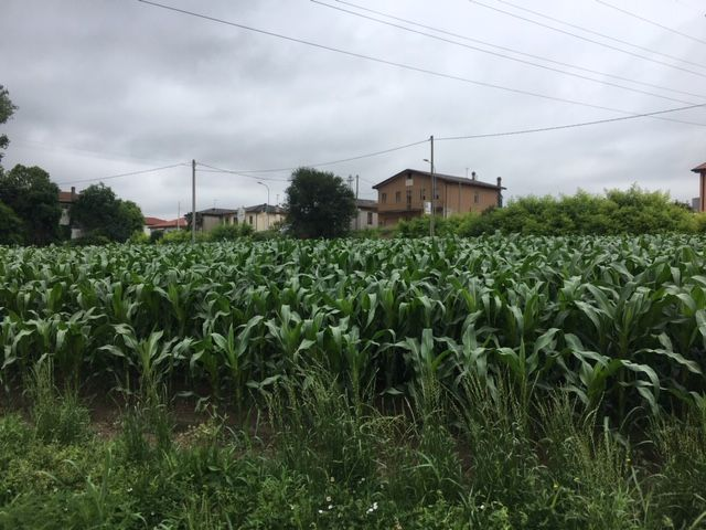 Vendo terreno agricolo/coltura Dolo (VE)