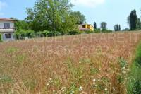 terreno in vendita San Pietro Viminario foto 004__dsc_0058.jpg