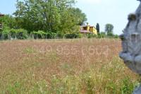 terreno in vendita San Pietro Viminario foto 005__dsc_0060.jpg