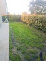 Tencarola recente 2 camere piano terra con giardino