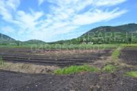 terreno in vendita Arquà Petrarca foto 005__dsc_0110.jpg
