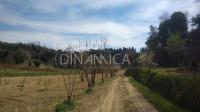 14 ha di frutteti e oliveti in produzione, lari pisa