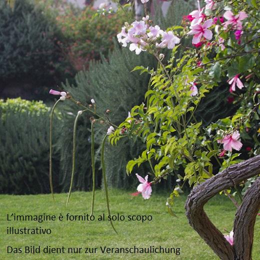 Laives, Rione San Pietro: Casa con giardino