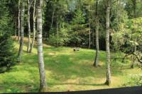 Villa in vendita a Pinzolo
