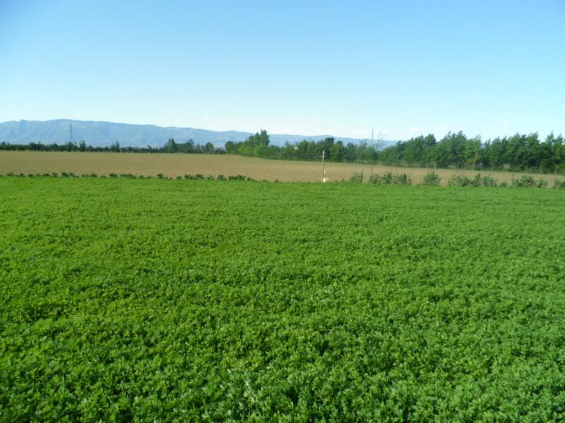 Vendo terreno edificabile residenziale Caldogno (VI)